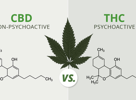 THC and CBD, What is the Difference?