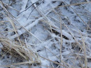 Pakkaspäivänä pellolla