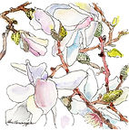 Forced Magnolias.jpg