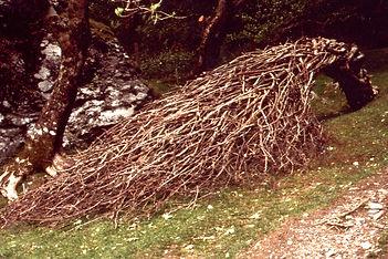 Forest Broom - 1.jpg