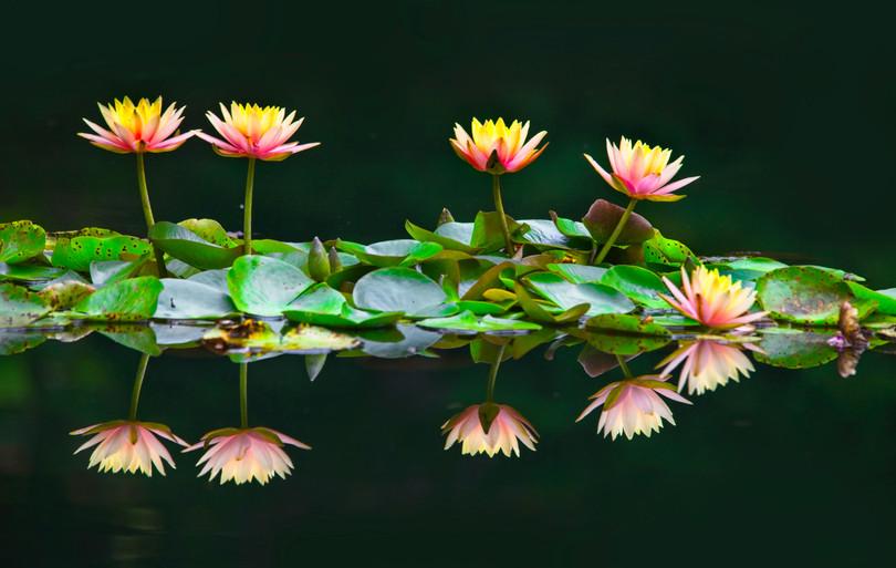 Pond Reflection  4674
