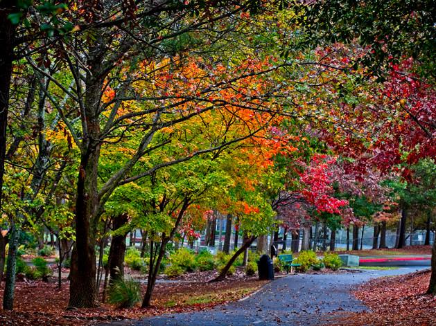Newtown Park, Alpharetta  3823