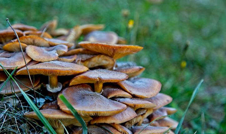 Tree Mushrooms  0851