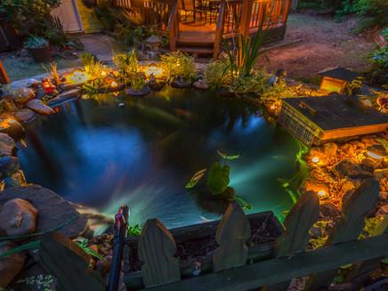 My Koi Pond at Night  9548