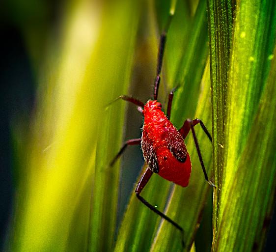 Bugs Life  9886