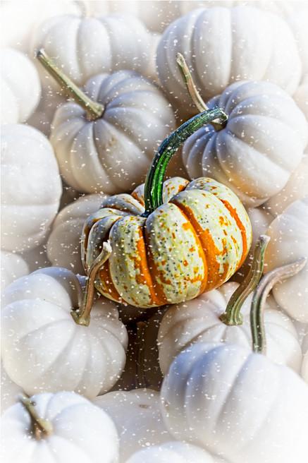 Pumpkin 4996