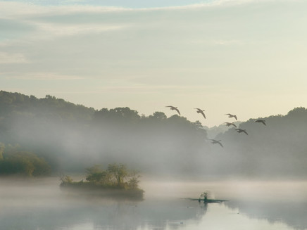 Morning Fog  7824