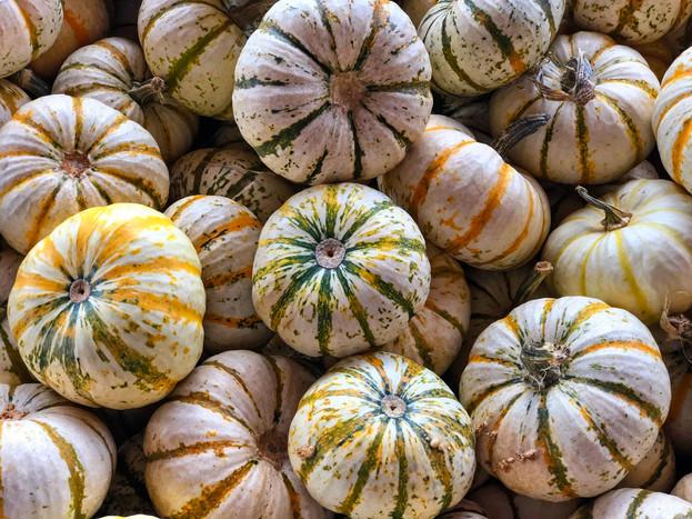 Pumpkins 1729