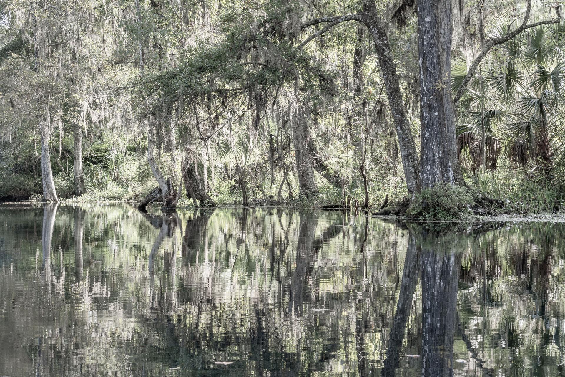 Scenic Silver River-14