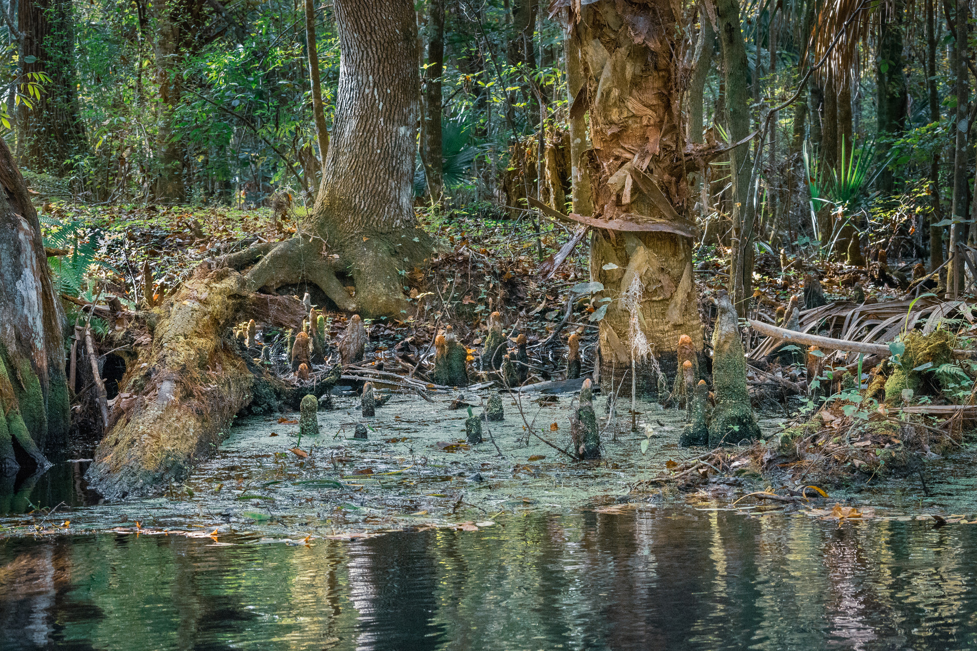 Roots Along the Silver River-1.jpg