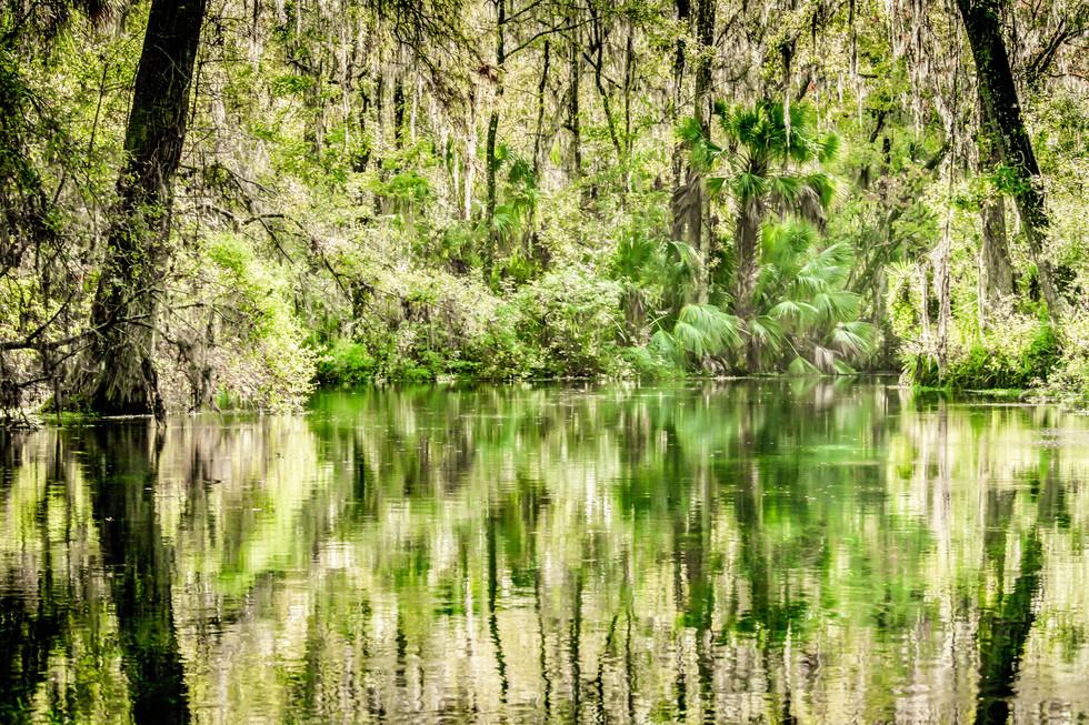 Scenic Silver River-15