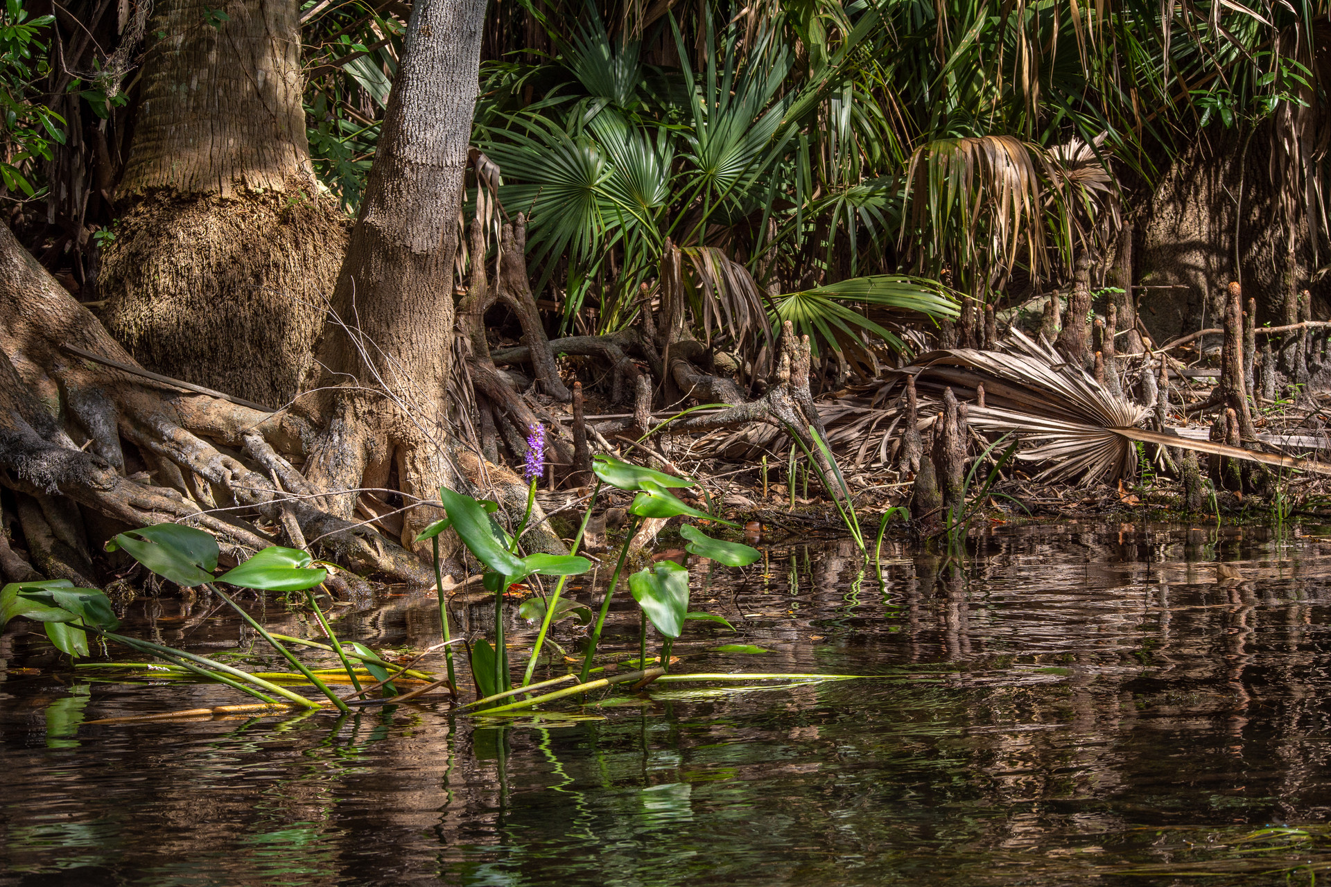 Roots Along the Silver River-20.jpg