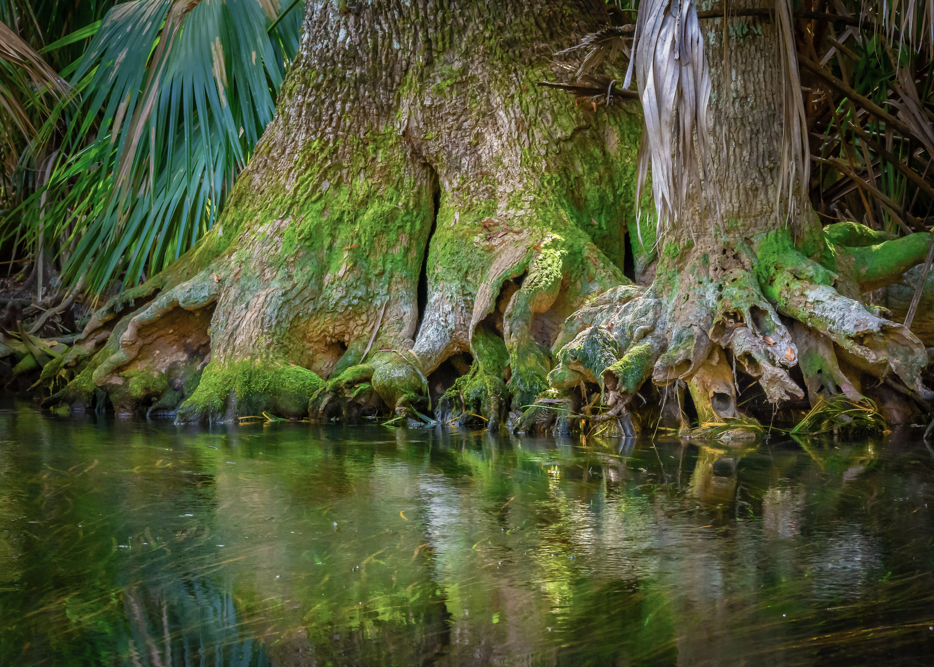 Roots Along the Silver River-5.jpg