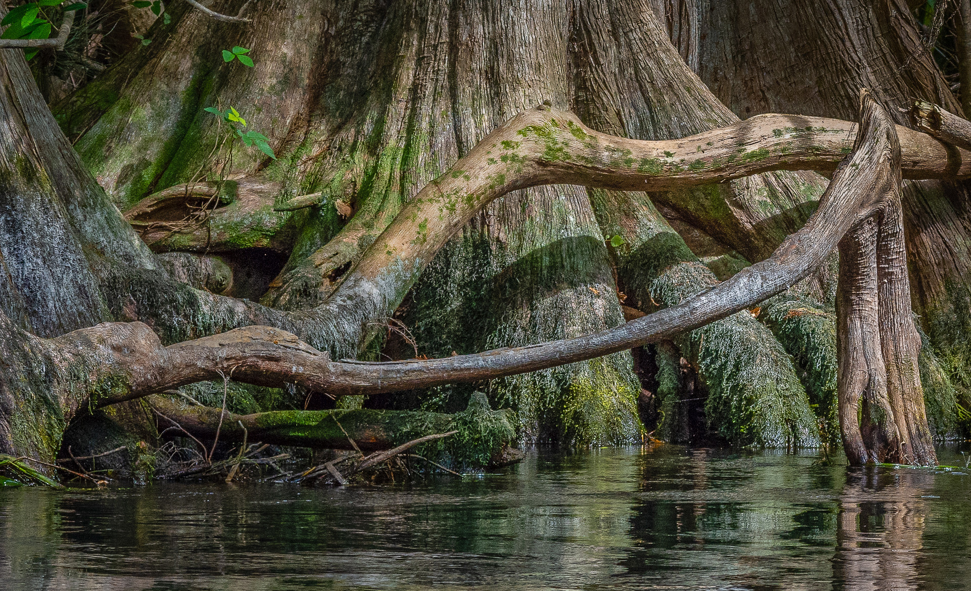 Roots Along the Silver River-10.jpg