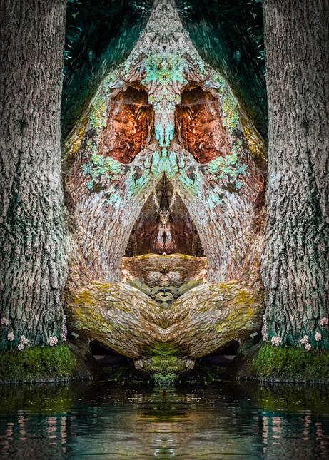 Swamp Faces