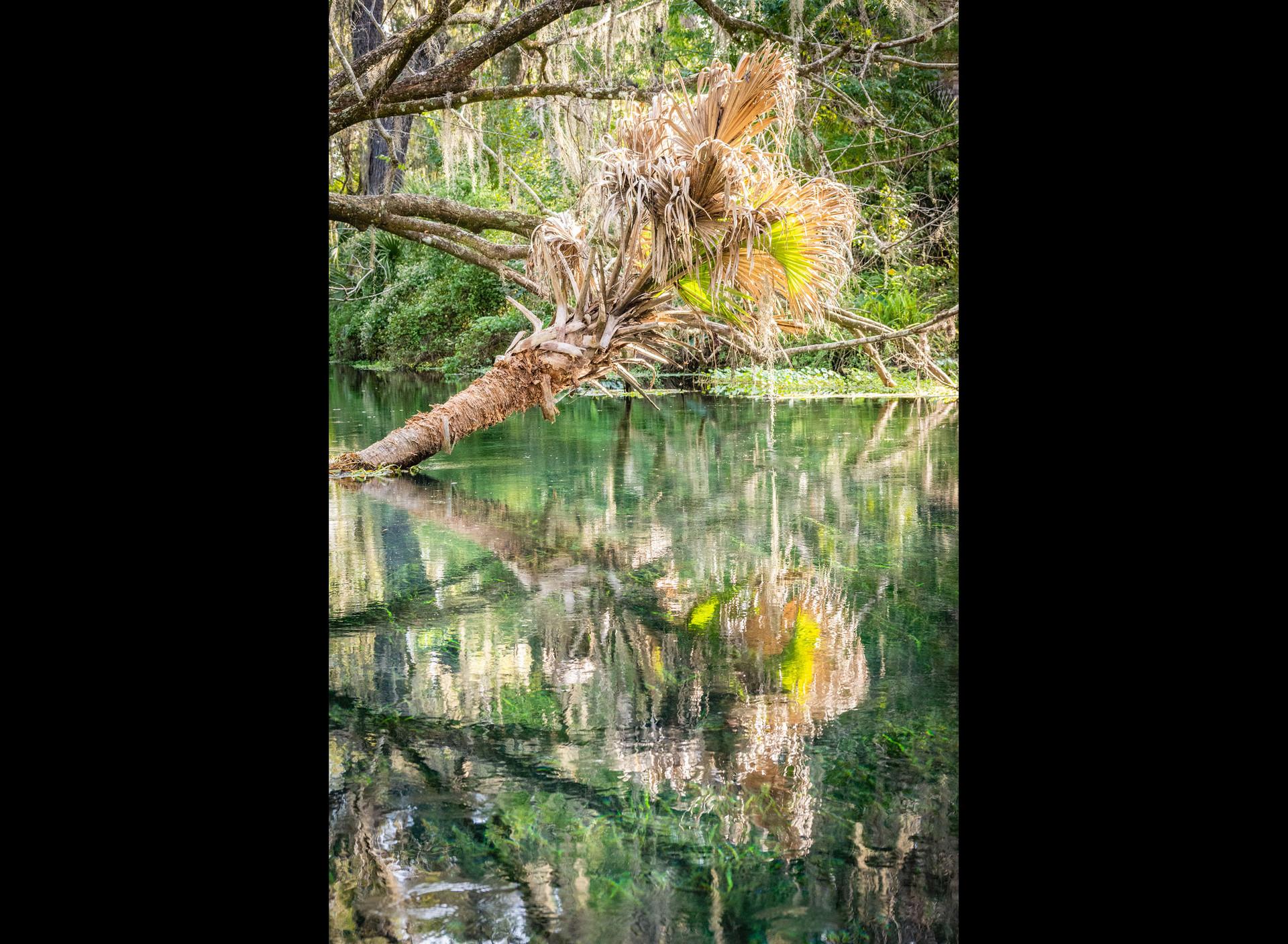 Scenic Silver River-12