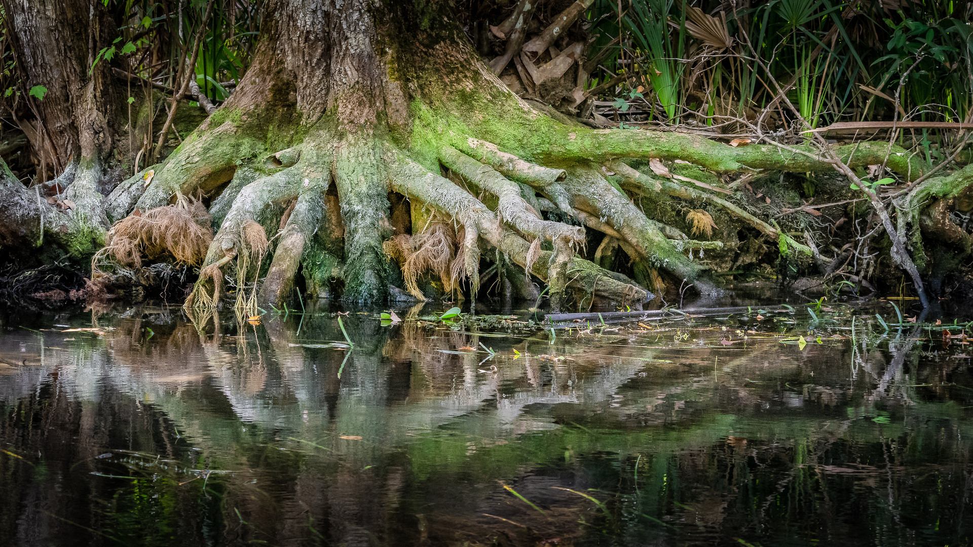 Roots Along the Silver River-13.jpg