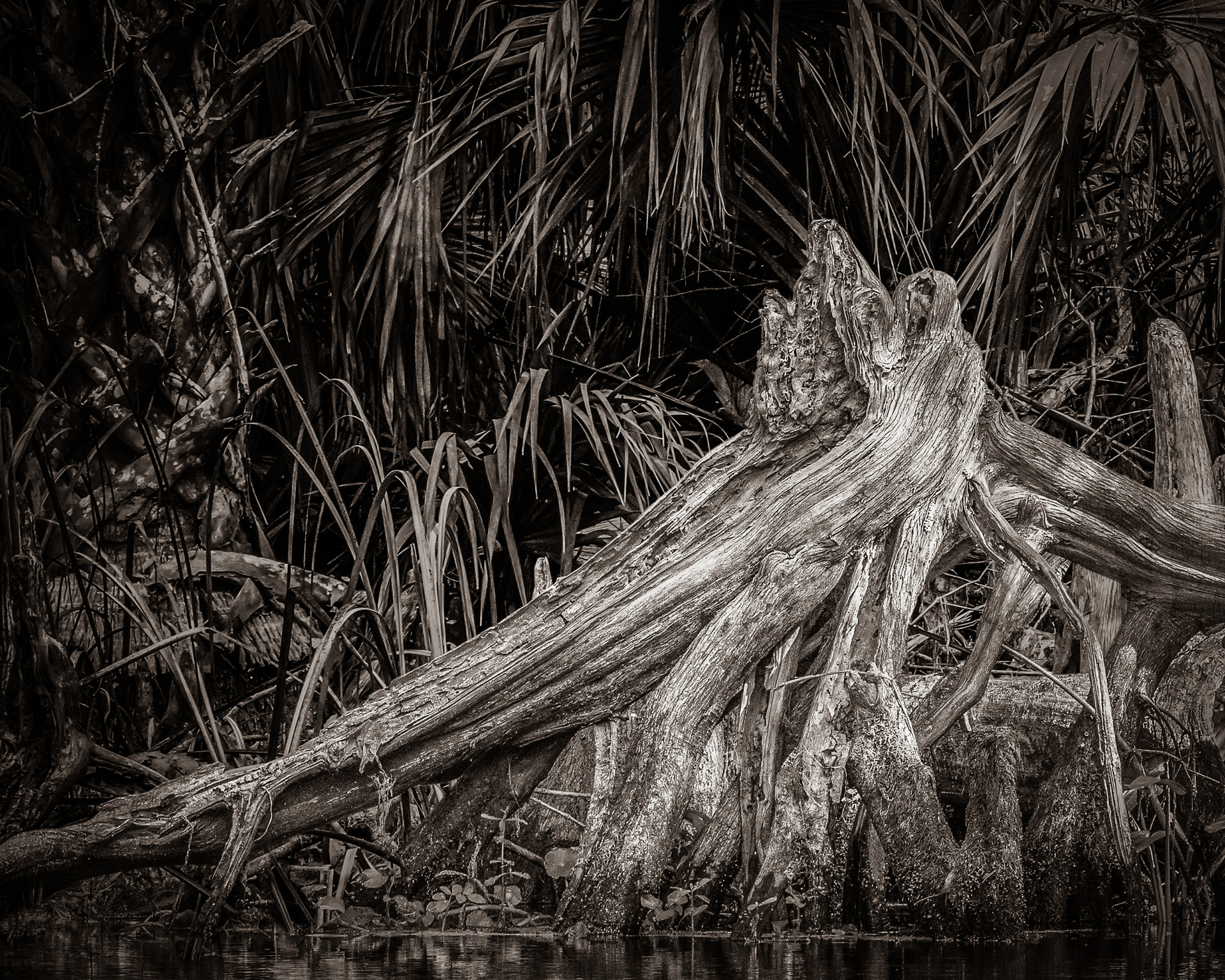 Roots Along the Silver River-11.jpg