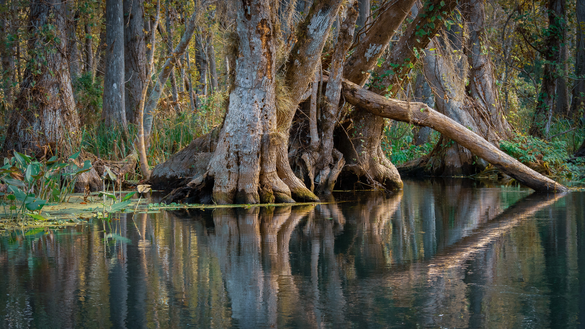 Roots Along the Silver River-9.jpg