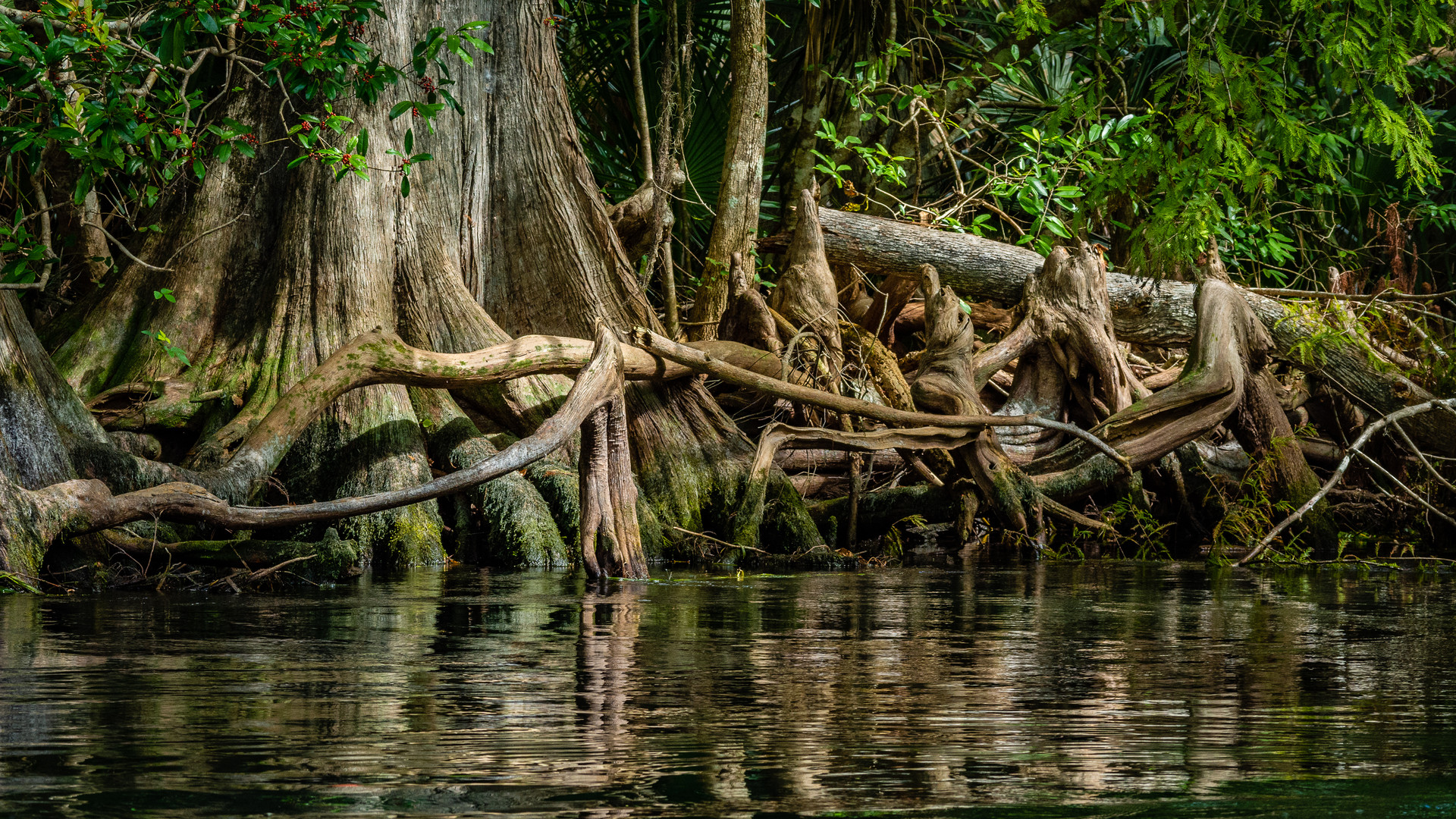 Roots Along the Silver River-18.jpg