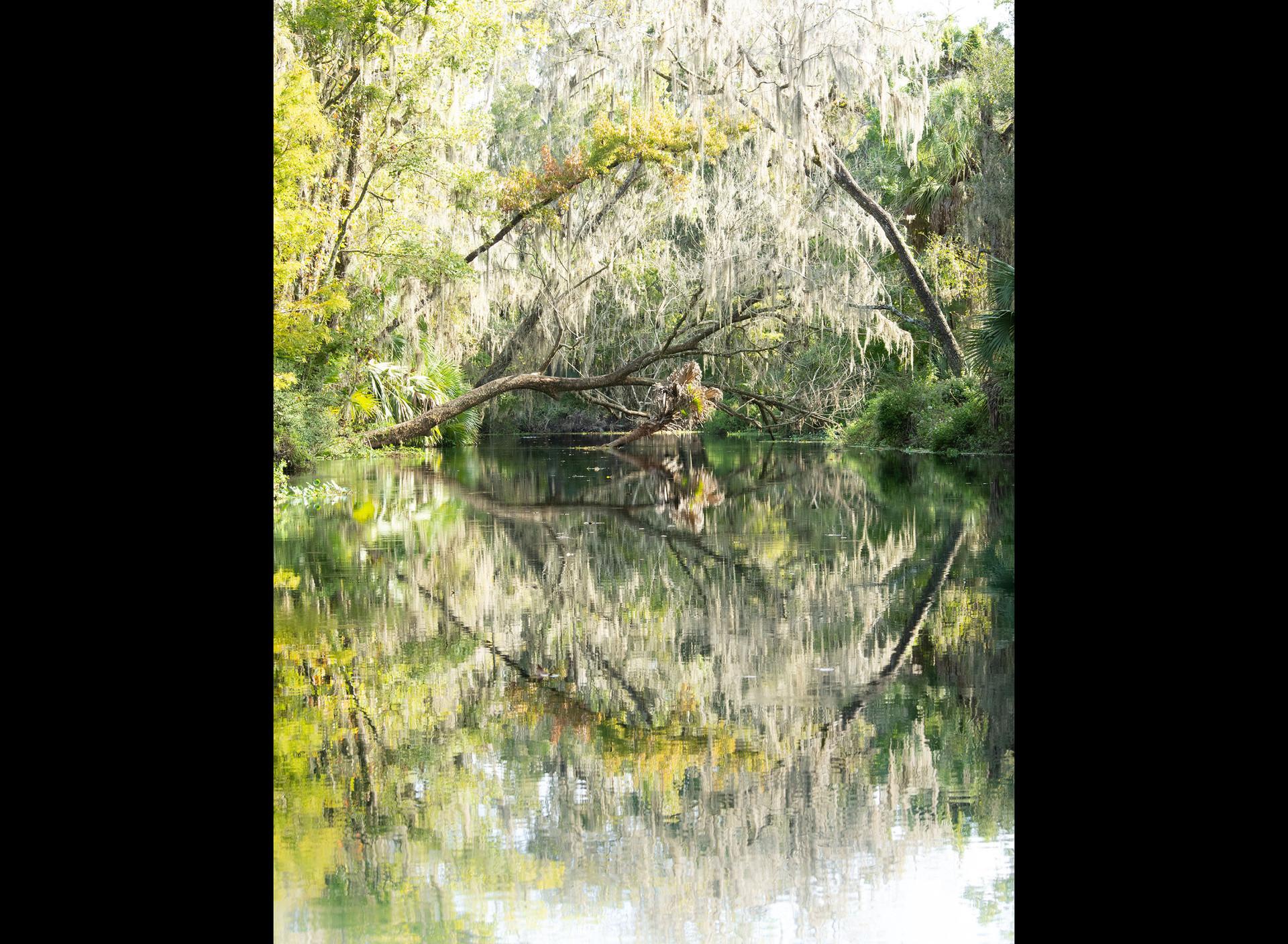 Scenic Silver River-10