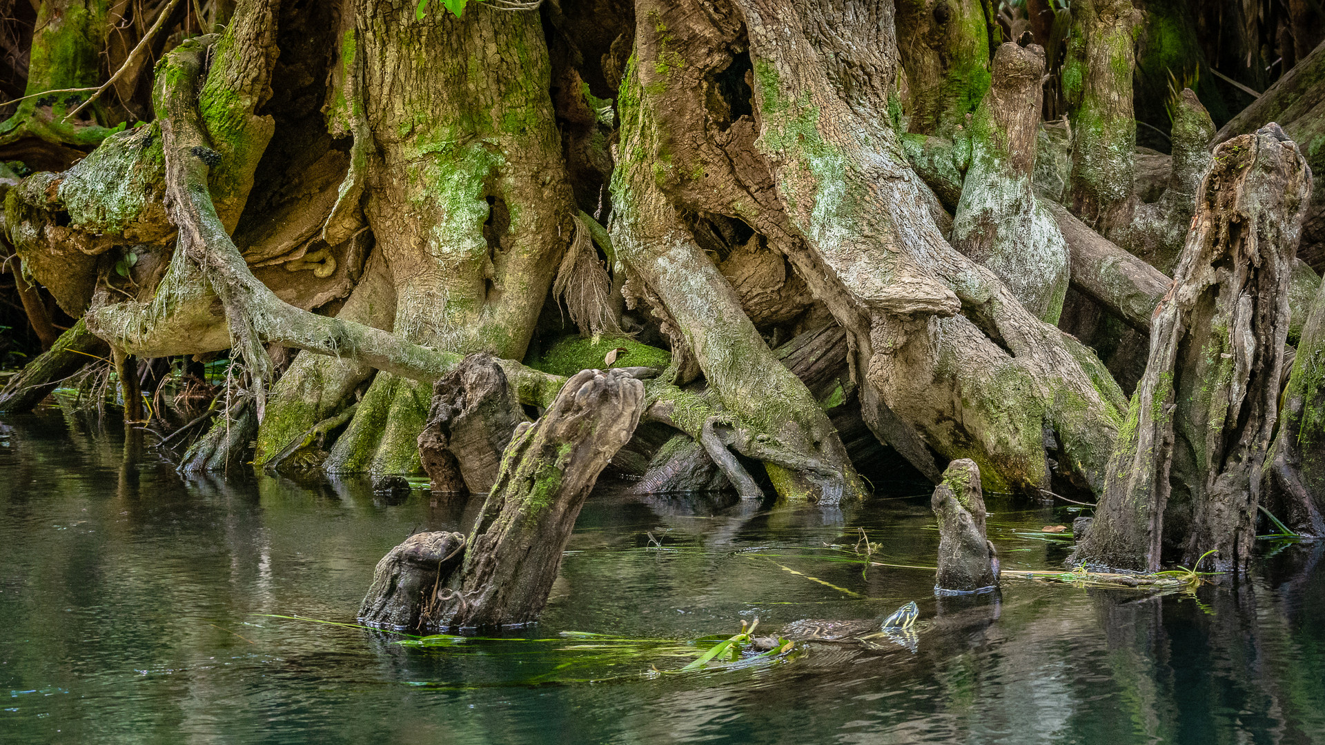 Roots Along the Silver River-6.jpg