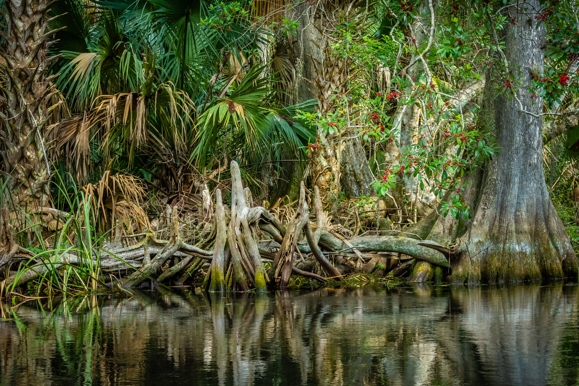 Roots Along the Silver River-16.jpg