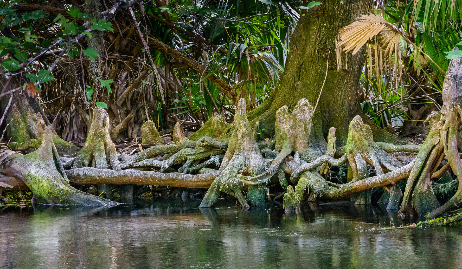 Roots Along the Silver River-12.jpg