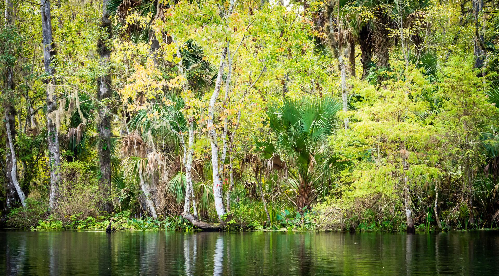 Scenic Silver River-16