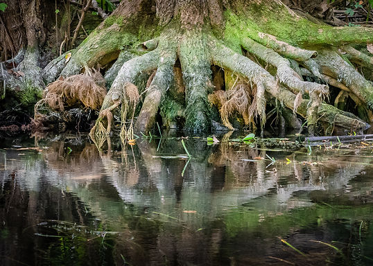 Roots Along the Silver River-14.jpg