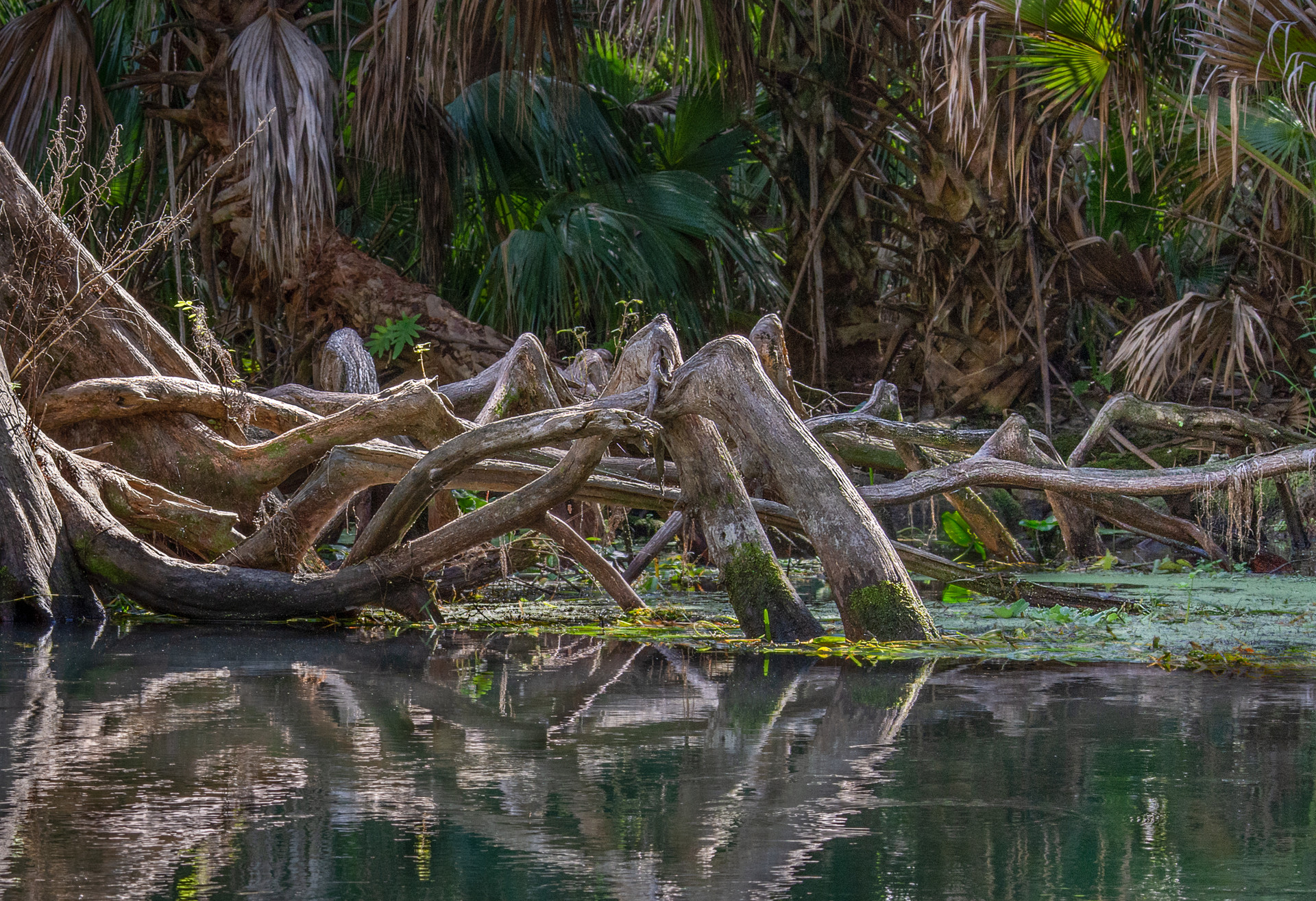 Roots Along the Silver River-8.jpg