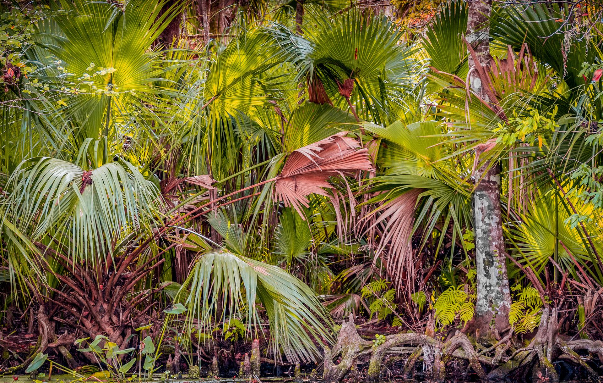 Colorful Jungle Abundance