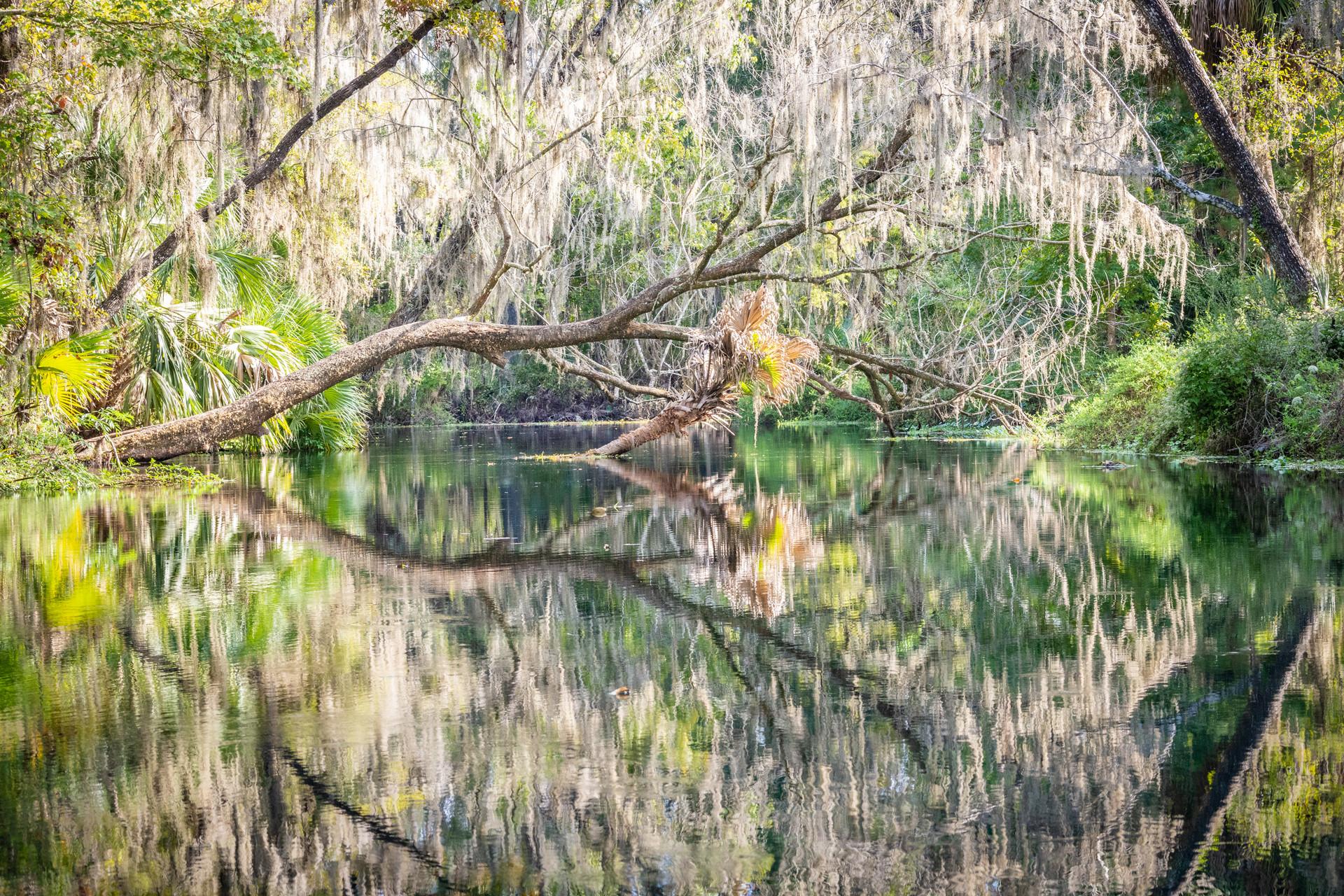 Scenic Silver River-11