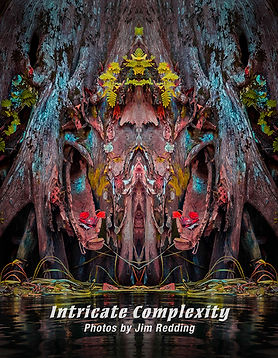 cover of Intricate Complexity book for w