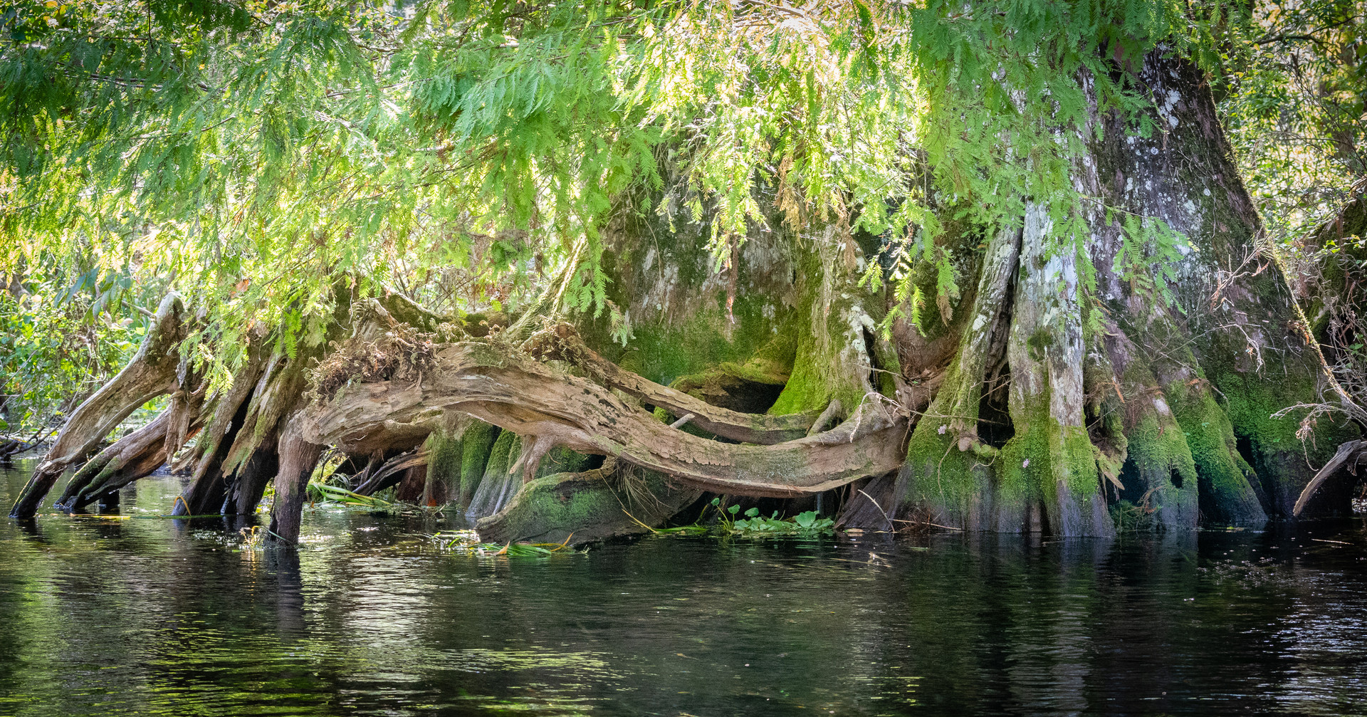 Roots Along the Silver River-17.jpg