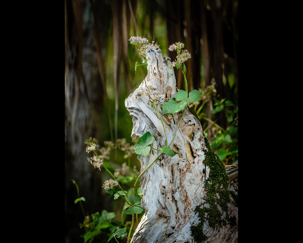 Sculptural Root Entwined By Tiny Flowers
