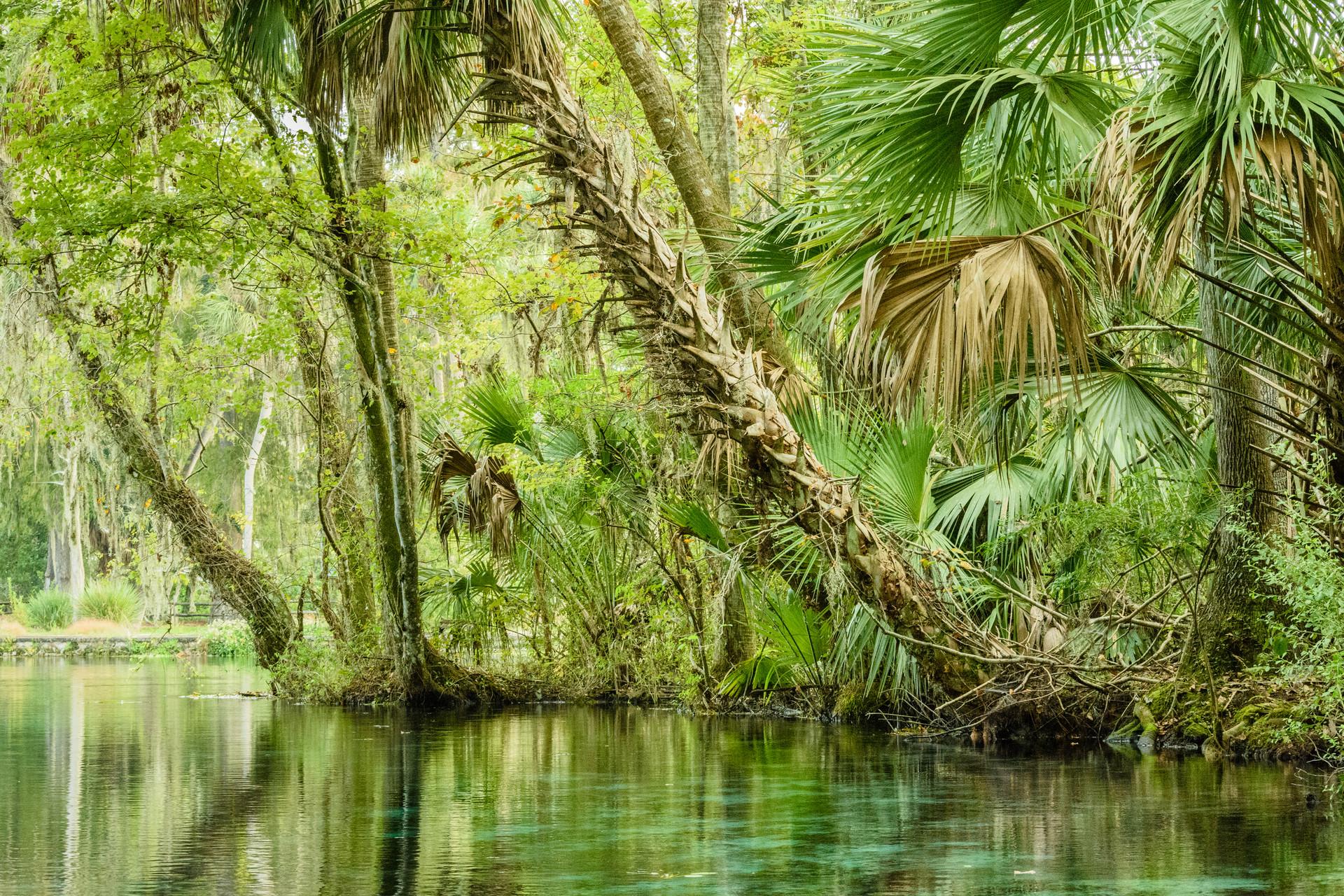 Scenic Silver River-2