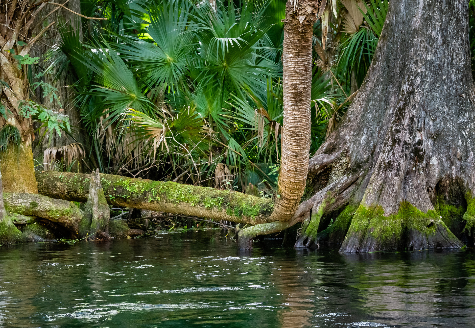 Roots Along the Silver River-2.jpg