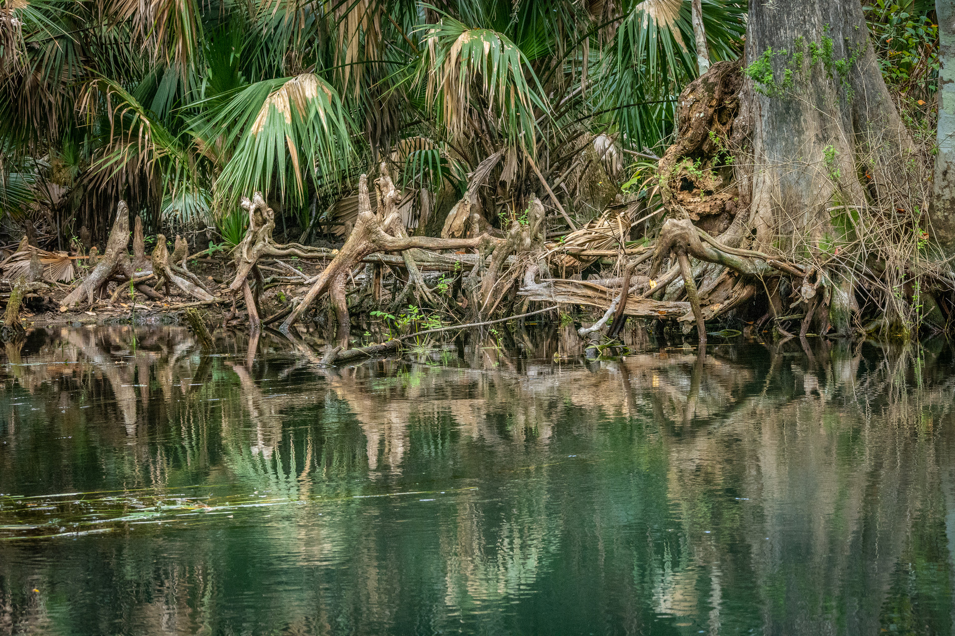 Roots Along the Silver River-15.jpg