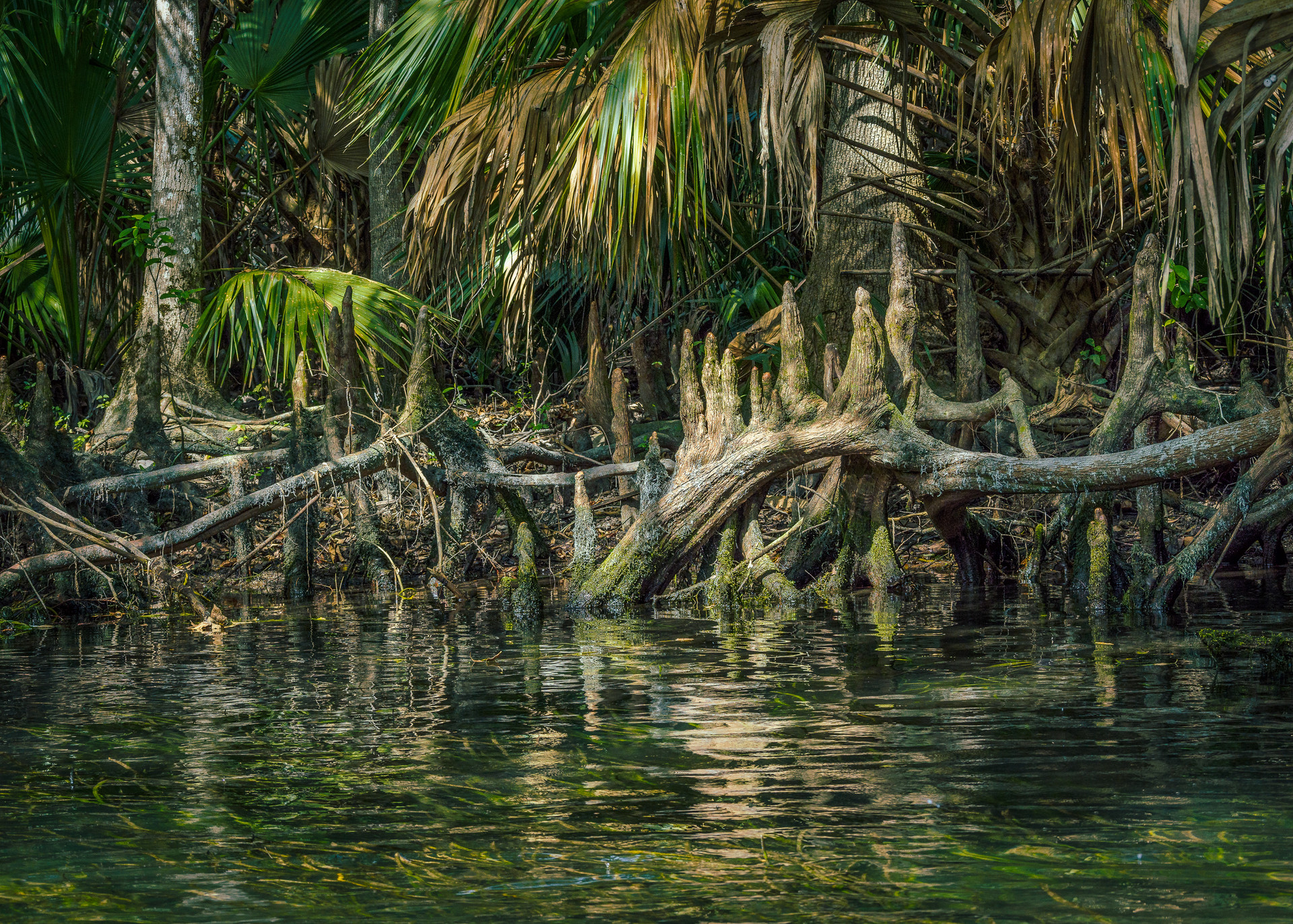 Roots Along the Silver River-19.jpg