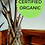 Thumbnail: 100pk Certified Organic Elderberry Cuttings - Ranch