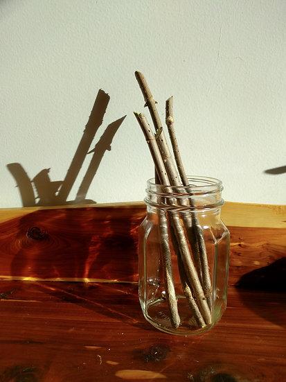 Elderberry Cuttings - WyldeWood 1