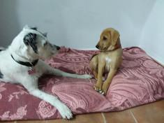 Shared Doggie Learning