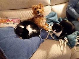 """DAD.... CATS...CATS...!!!"