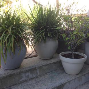 Some gardening ideas
