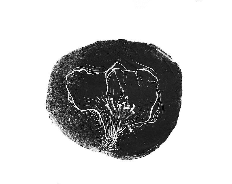 herbarium_444 001.jpg