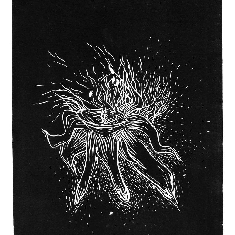 herbarium_1 001_editado.jpg