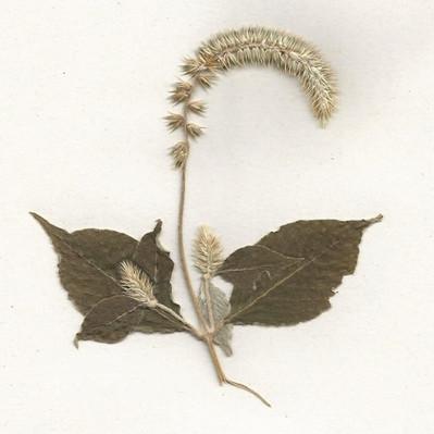 herbarium_55 001_editado.jpg