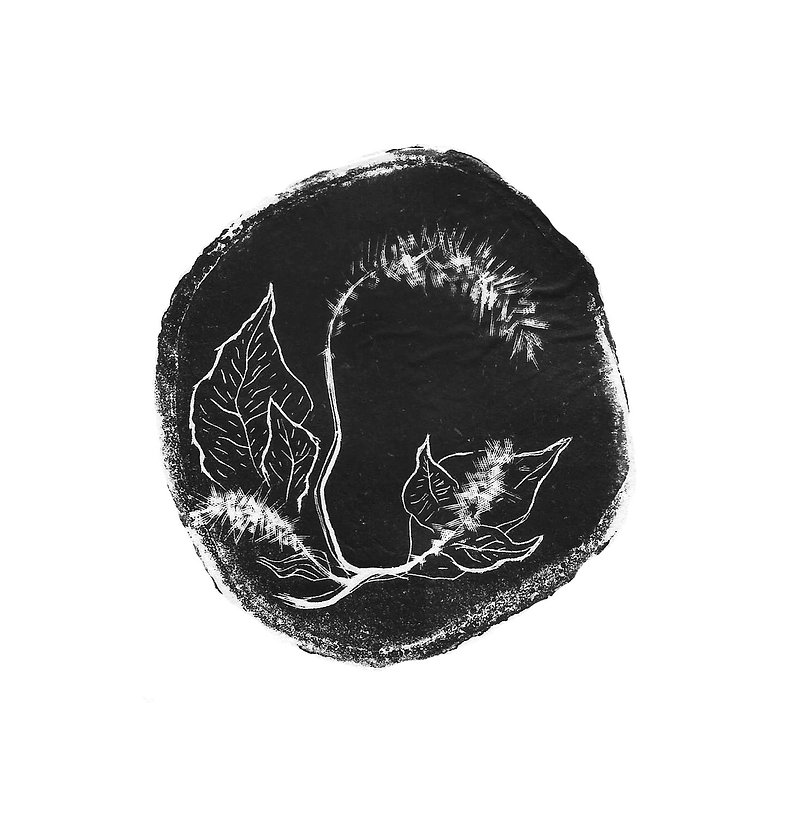 herbarium_5 001.jpg