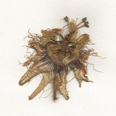 herbarium_3 001_editado.jpg